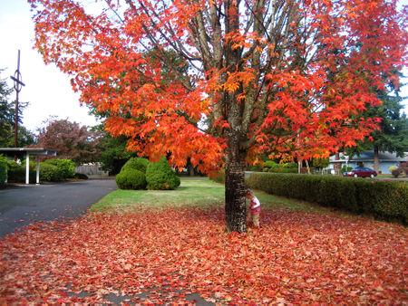 Fallday_leaf1
