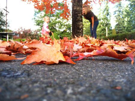 Fallday_leaf2