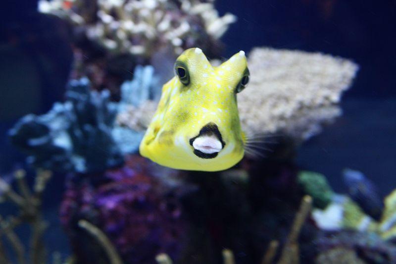 Seattle_aquarium2