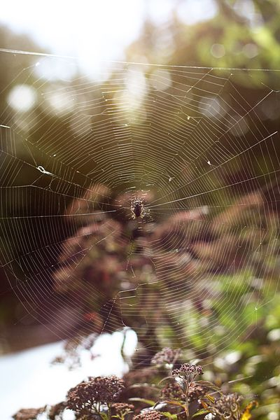 Iheart_spiders