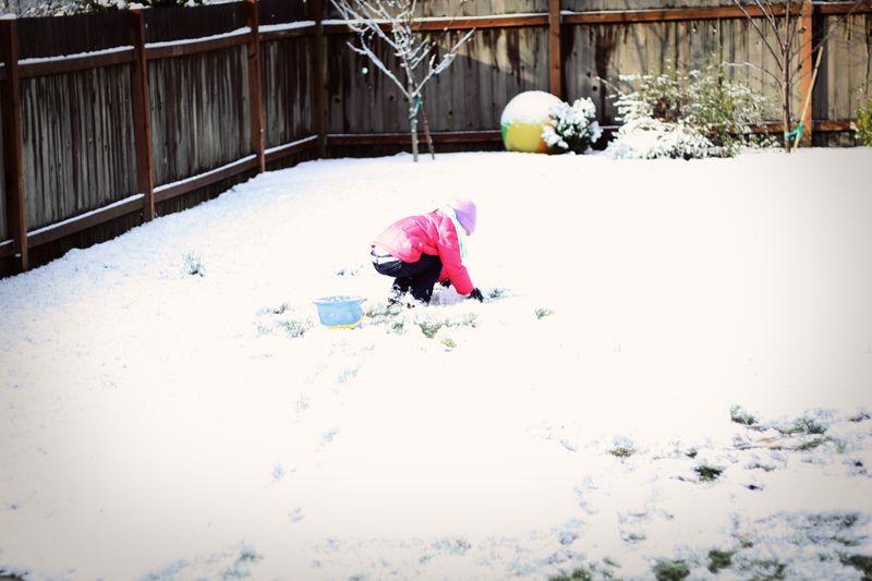 Snowday4