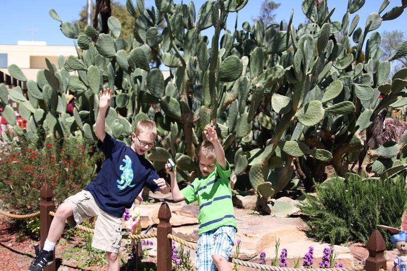 Cactusgarden1