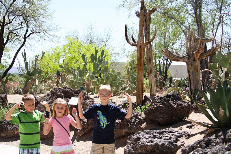 Cactusgarden12