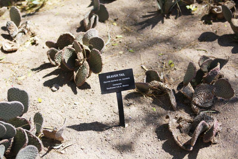 Cactusgarden14