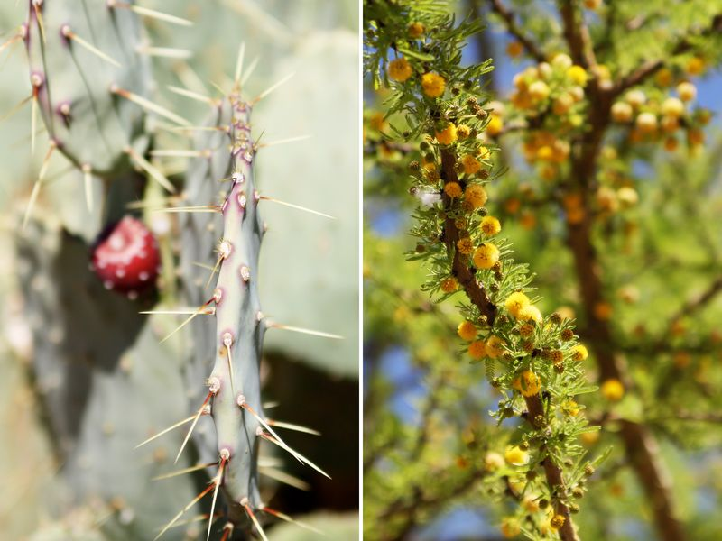 Cactusgarden2