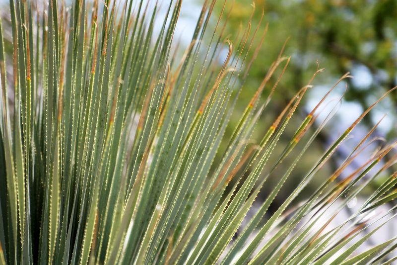 Cactusgarden9