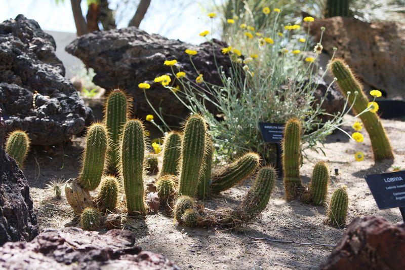 Cactusgarden10