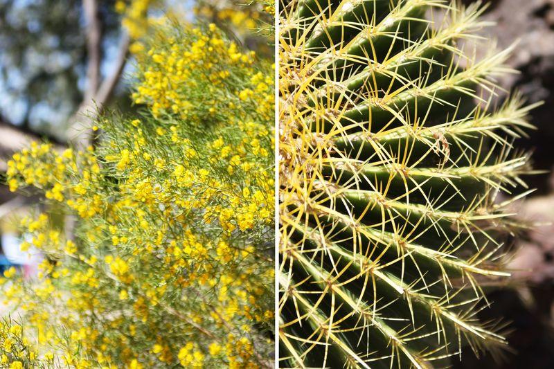 Cactusgarden5