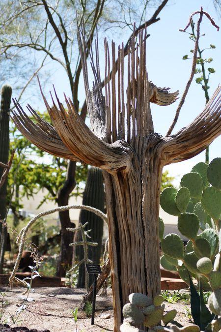 Cactusgarden13