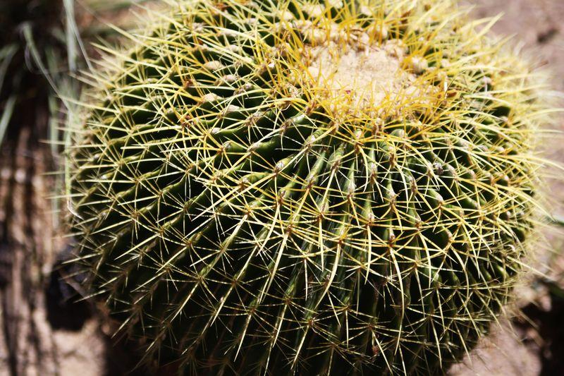 Cactusgarden15