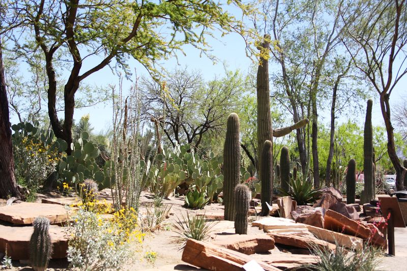 Cactusgarden16