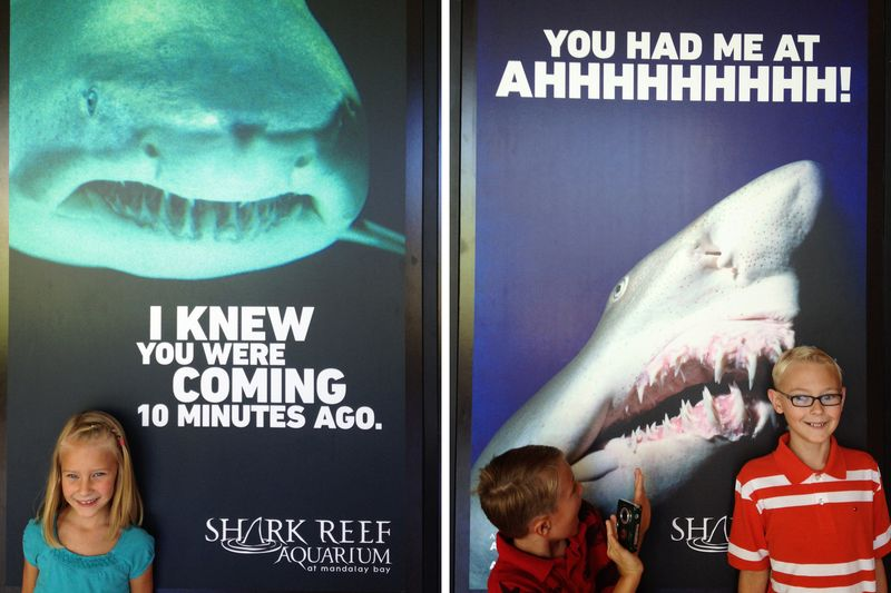 Sharkreef7