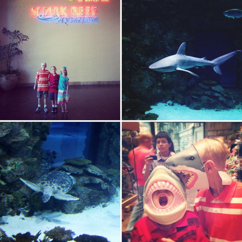 Sharkreef1