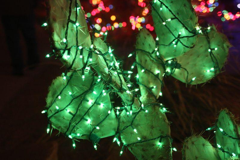 Cactuslights9