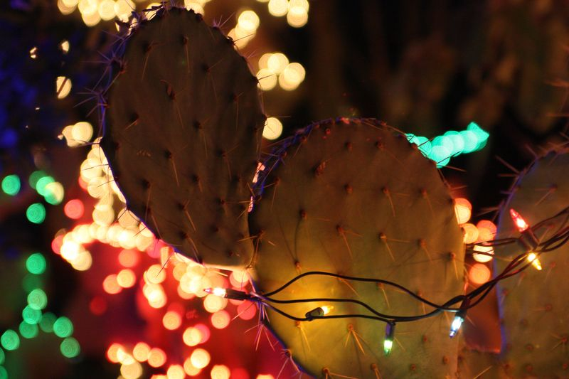 Cactuslights3