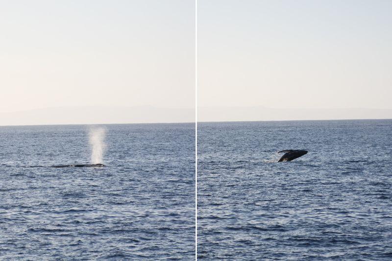 Whalewatch3