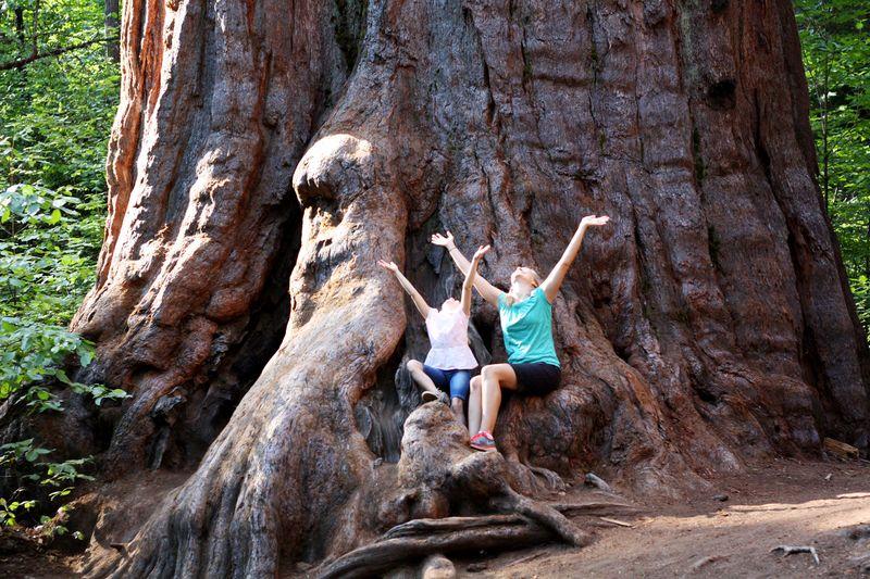 Bigtrees4