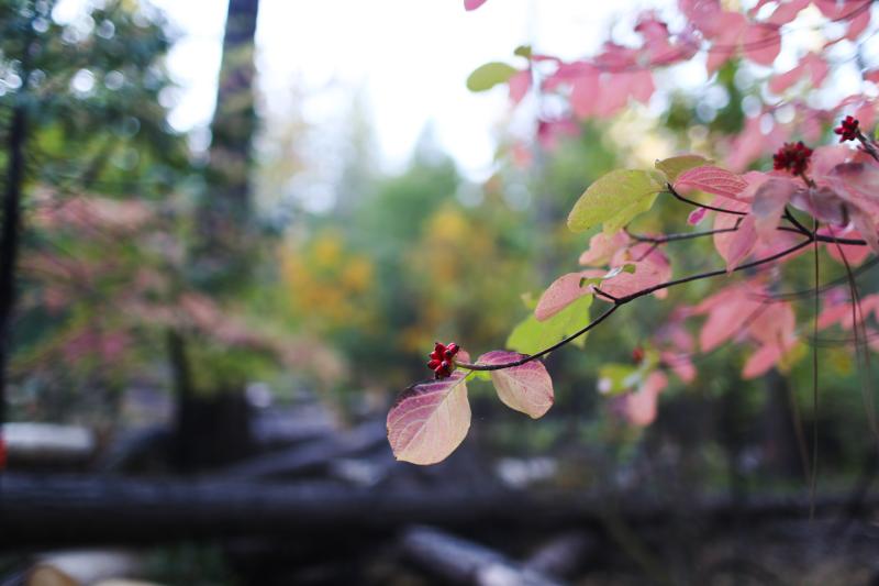 Fall Cabin-3