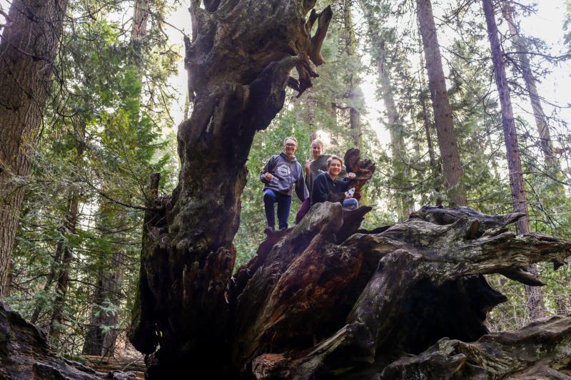 Hiking Big Trees -1