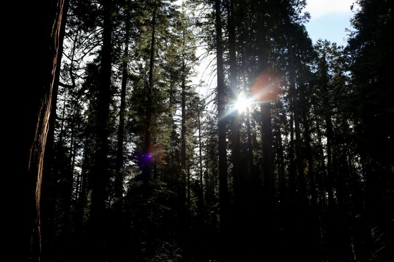 Hiking Big Trees -8