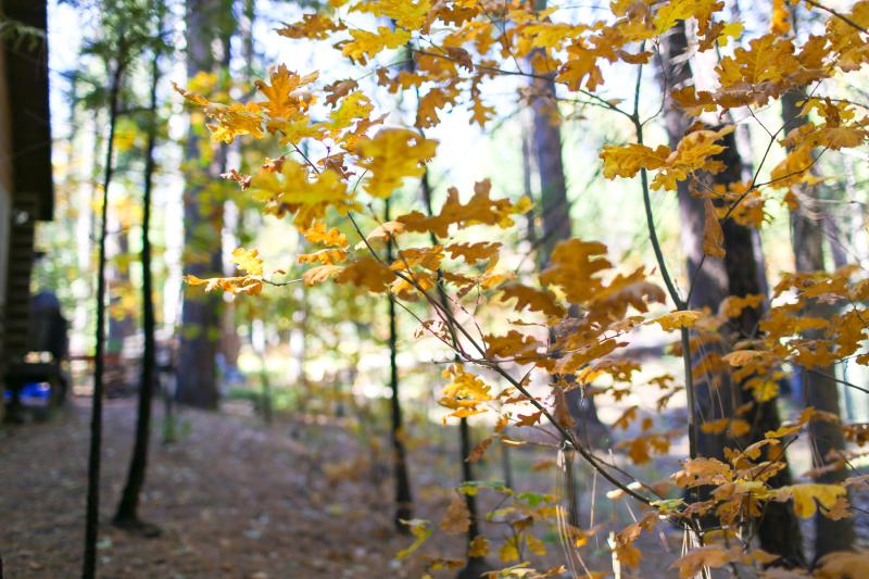 Fall Cabin-2