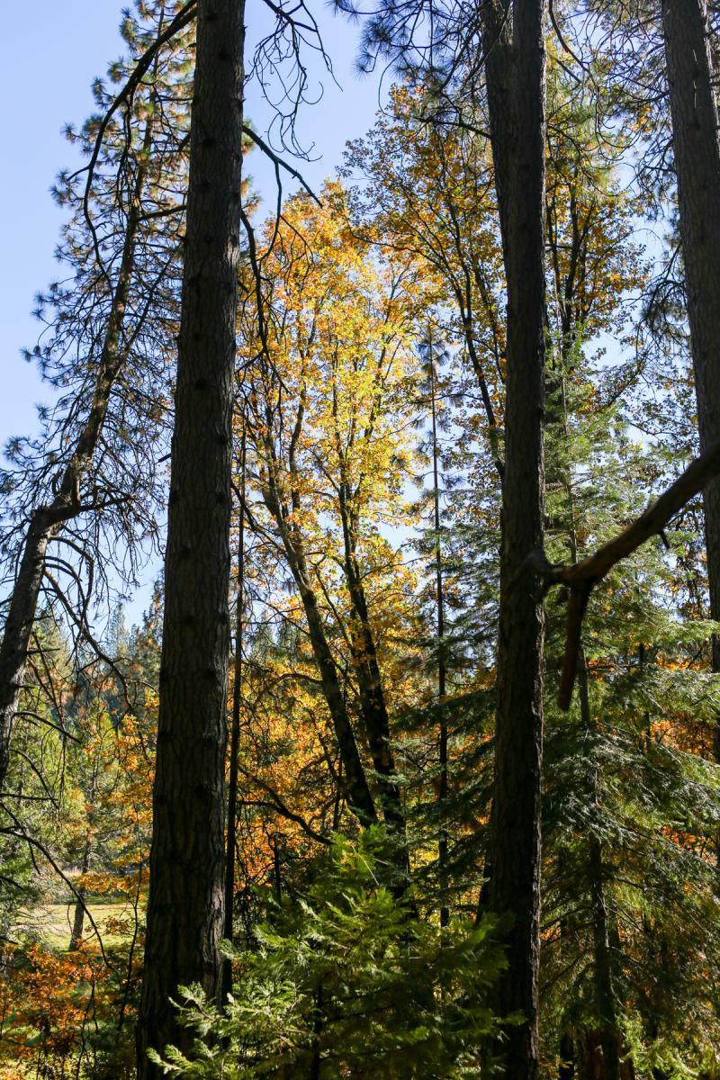 Fall Cabin-1