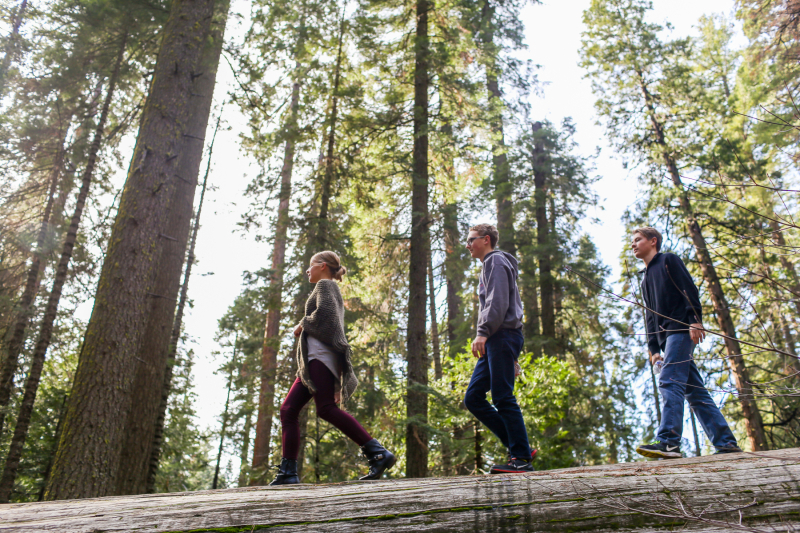 Hiking Big Trees -4
