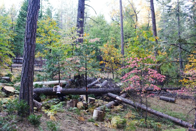 Fall Cabin-5