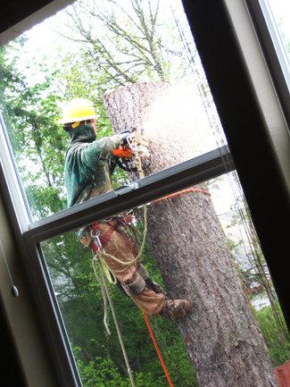 Timber_lumberjack_2