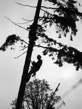 Timber_lumberjackbw