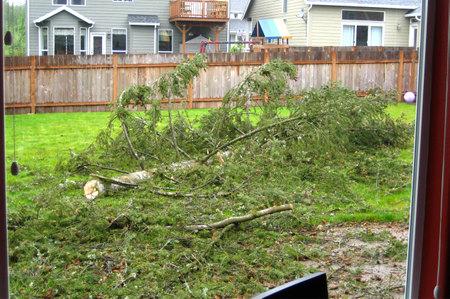 Timber_tree